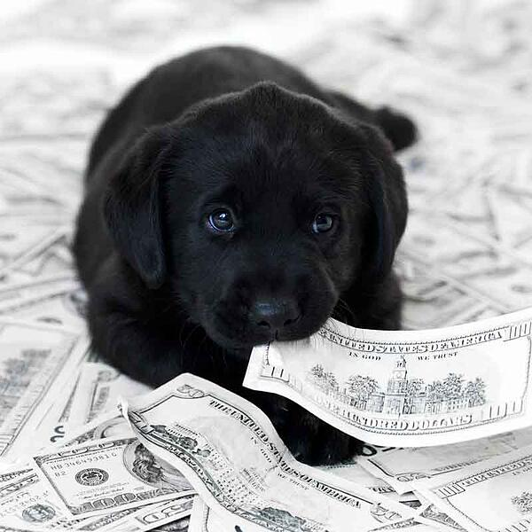 puppy surrounded by cash