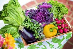 Vegetable_Garden_Save_Money