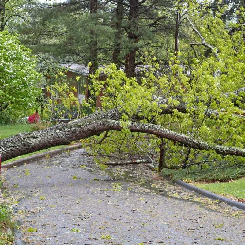 How to Manage Your Money After a Natural Disaster