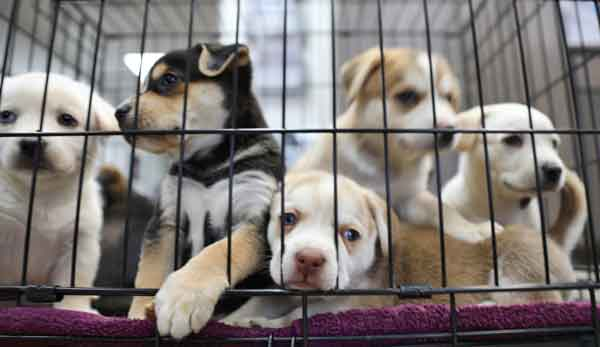 dogs-in-a-cage-adoption_webopt
